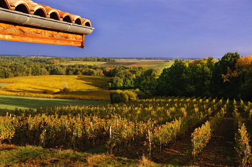 """France-Aquitaine-Gironde- Vineyards in the """"Entre Deux mers"""" area, near La reole, in the Bordeaux wines district."""